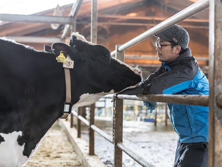 牛と向き合っているところ