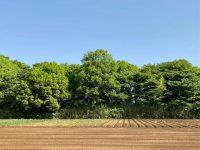 少量多品目農家は畑の日かげを利用すべし。酷暑の中、無理をせずに、しっかり稼ぐ方法