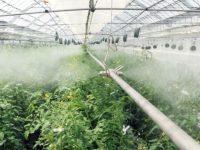 ハウスや畜舎、作物を冷やす! 空調設備・ミストファン・冷蔵庫おすすめ7選