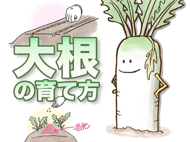 農家が教えるダイコンの育て方 土作りに欠かせない成分とは?