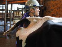 繁殖は愛~繁殖成績が牛の健康のバロメーターとなる話~