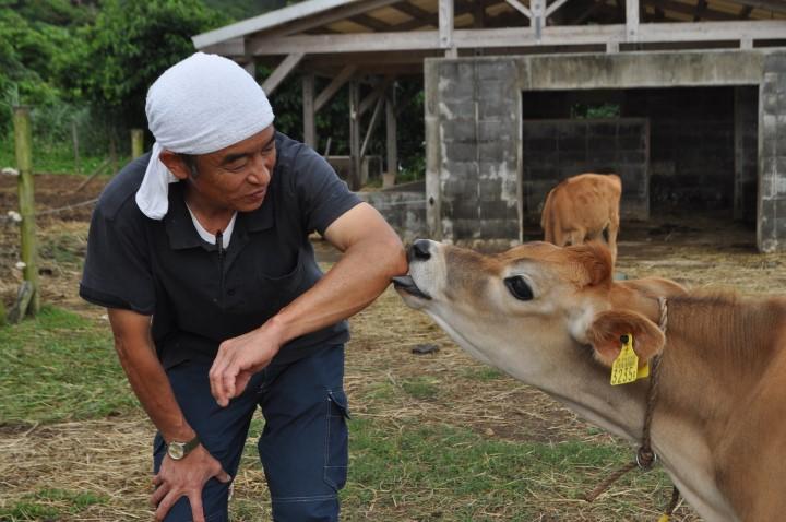 石垣島に移住していきて 伊藤さんと牛