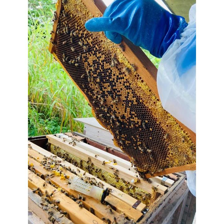 江並さんが養蜂を始めるまで 蜂の巣 蜂群