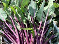 """少量多品目農家なら""""捨てるところのない野菜""""を選べ! コウサイタイ出荷の3形態とは"""