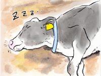 酪農漫画「うしだらけの日々」 第23話 乾乳