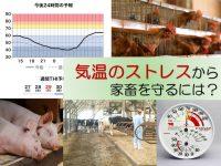 気温は家畜のストレスになる? 畜産農家が知るべき天気の知識