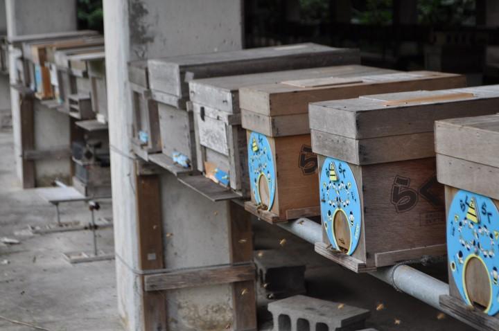 江並さんが養蜂を始めるまで 蜂箱
