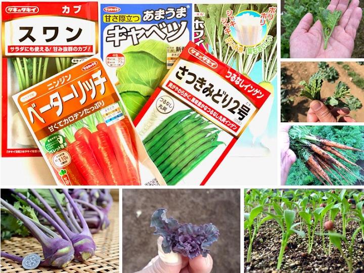 種袋の写真に惑わされるな! 少量多品目農家がめざすべき野菜の完成形とは