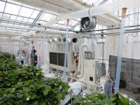 曇天でも大玉イチゴを 複合環境制御技術で収量と品質を確保