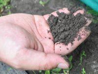 """収量130%UP!? 収量増加・高品質のキュウリを作る秘訣は「自然」をお手本にした""""土づくり""""と""""ミネラル栽培"""""""