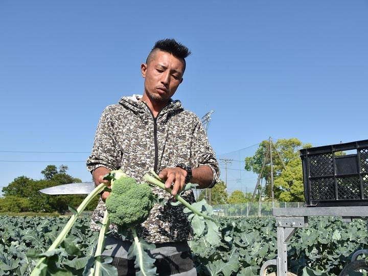 ブロッコリーを収穫する和想農園のワソ(谷和洋)さん