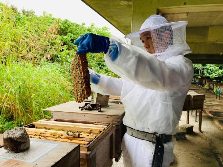 江並さんが養蜂を始めるまで 蜂の巣を点検する江並さん