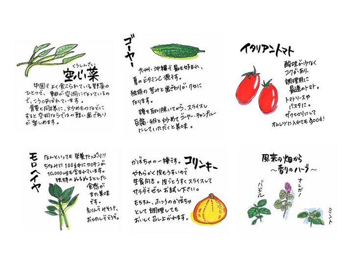 小さい農家の夏対策 「夏の葉物」のススメと病害虫防除【ゼロからはじめる独立農家#23】