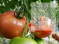認知されてこその価値UP!福島県いわき市『親バカトマト』の土づくり&ブランディングの重要性