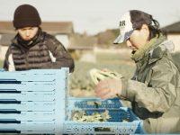 【農業研修生募集!】営農のカタチが進化する、福島県相馬地域で見つける自分らしい営農スタイル。今こそ、相馬に農業を倣うべき理由。