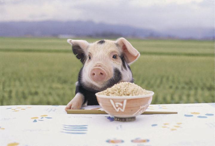 平田牧場三元豚とコメ