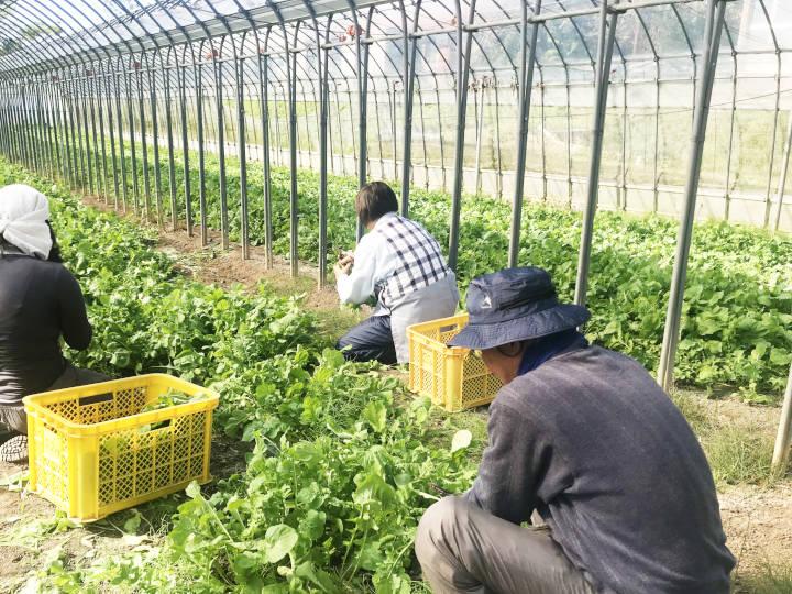 ハーブ生産農場内_農場スタッフ