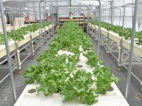 小規模生産農家の経営改善は「効率化」にあり! 水耕栽培による1年を通した安定収入と、その先に見えた環境保全への取り組み