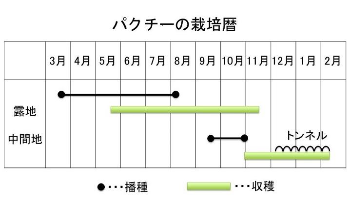 パクチーの栽培暦