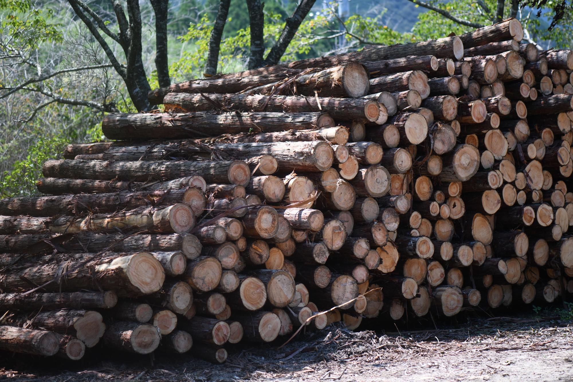 伐採して並べられた木材