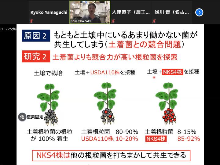 根粒菌NKS4株
