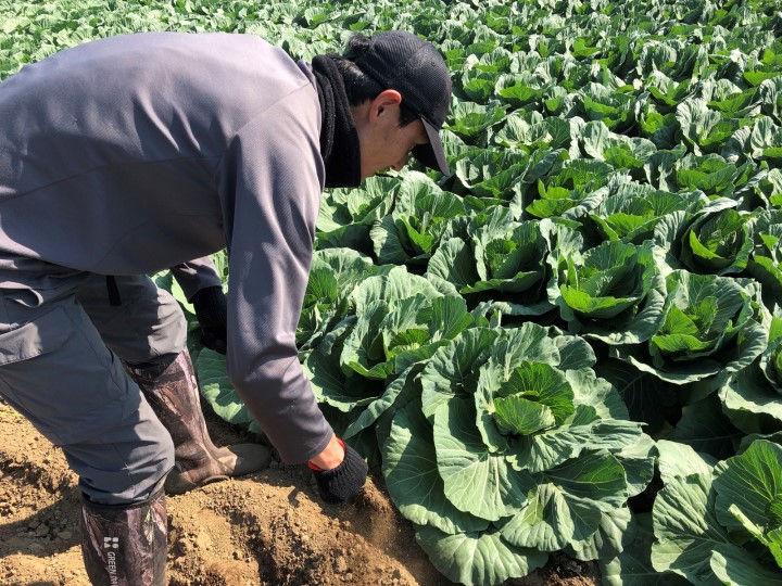 なぜ、最大手不動産企業が農業に? キャベツ参入のウラに見た、壮大な野望