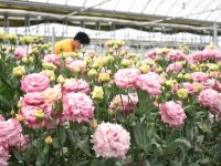 【農業体験in福島県浪江町】先進的花き栽培の技術と営農を体感。見えてきた、目指すべき農業人の姿