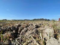 田んぼから畑へ転換! 水はけはどうする? 土壌改良への挑戦