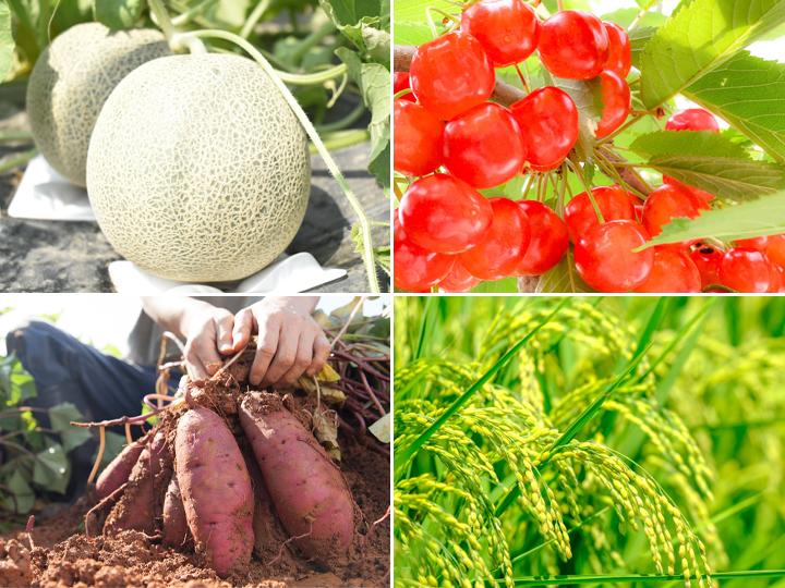 """【山形県農業体験募集!】米、果樹、野菜全てが逸品。農業やるなら山形へ!頼れる支援体制と先輩就農者に聞く""""やまがた""""を選んだ理由"""