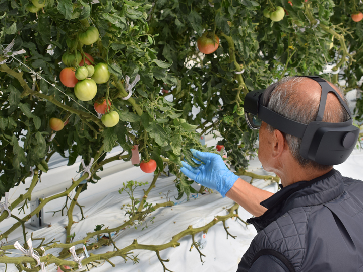 ローカル5Gで農業技術を手ほどき 栽培未経験者でも成功