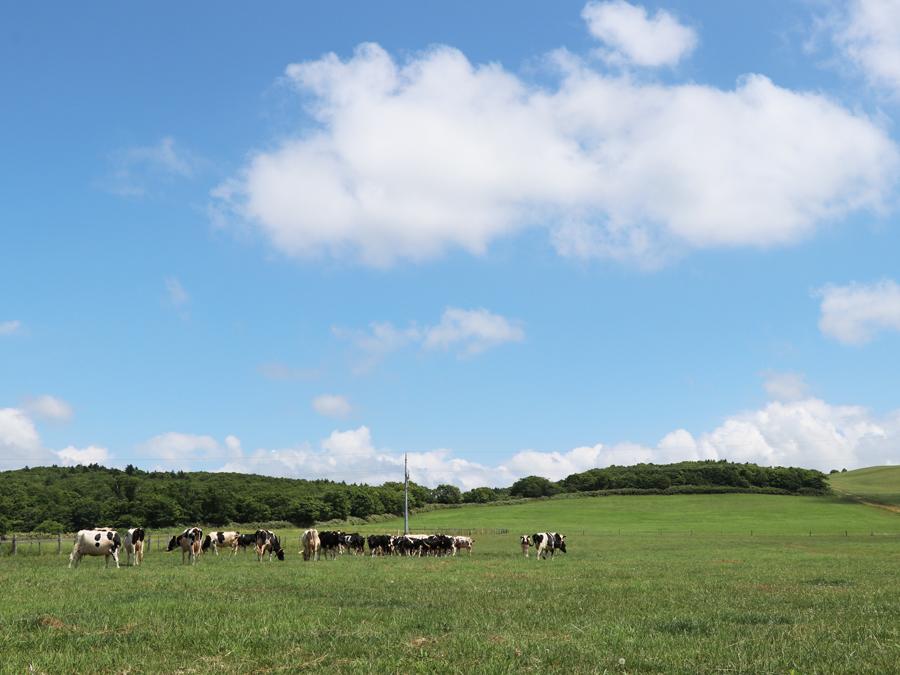 酪農ヘルパーから新規就農も!大自然がひろがる北海道・豊富町で目指す、酪農という仕事