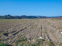農業をしない人の農地相続におけるポイントを紹介!取れる選択肢は?