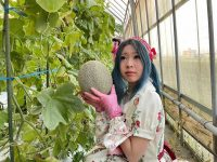 ついにメロンの収穫! ロリータが4世代経営農家で農業修行してきた vol.4