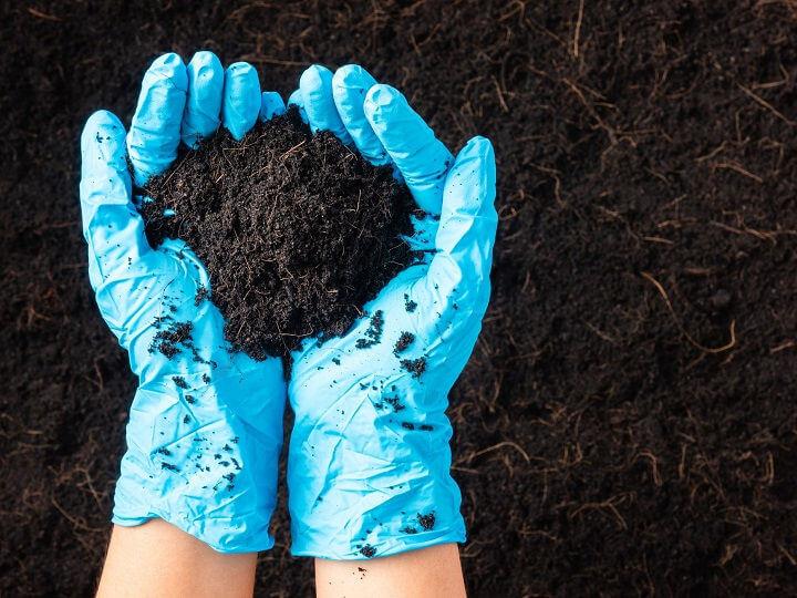 カギはウリ科植物? 汚染物質を分解、作物の生育促す微生物の正体