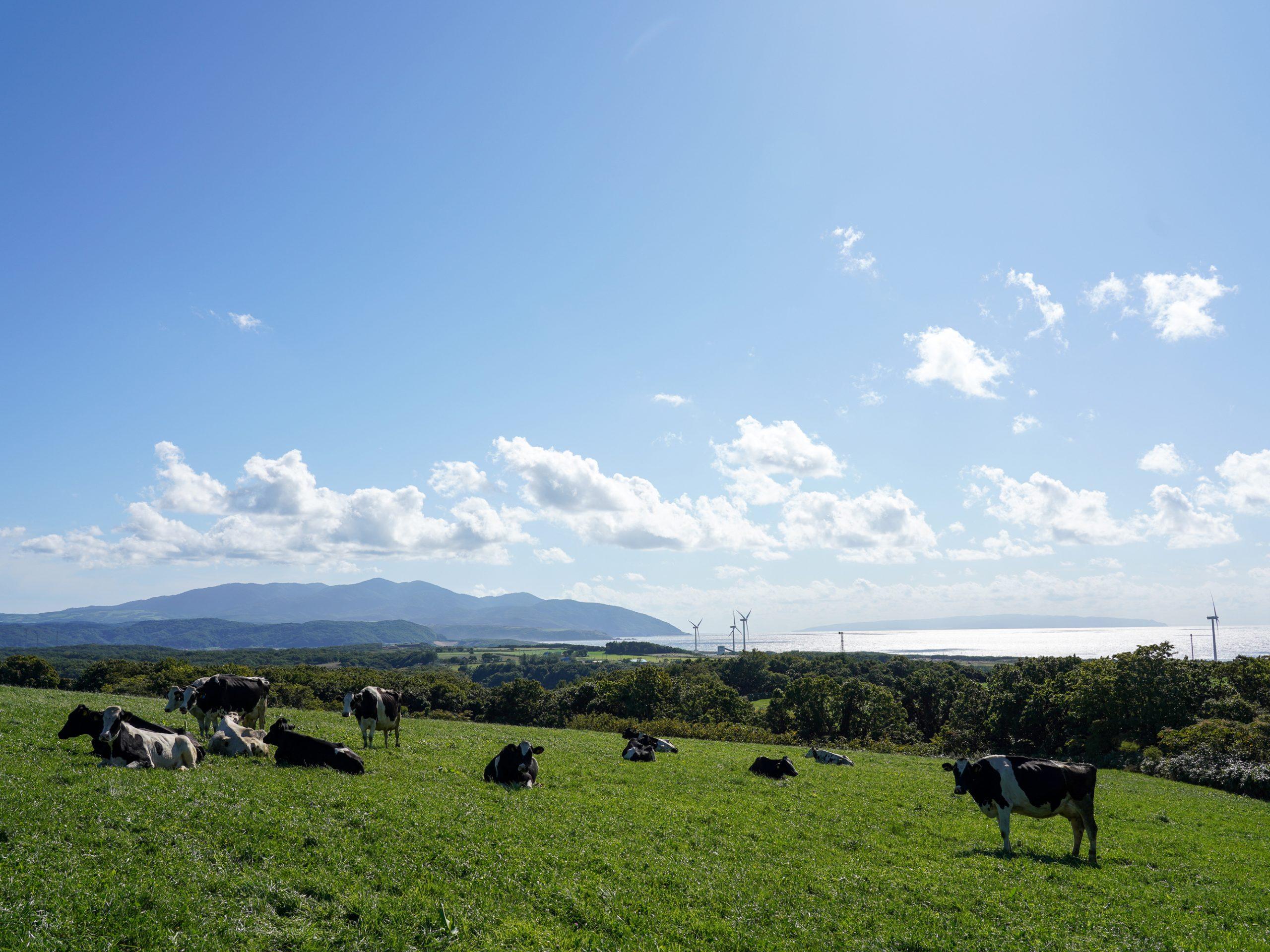 放牧の牛たちが優雅に暮らす、海と山が美しい町で酪農家の第一歩を
