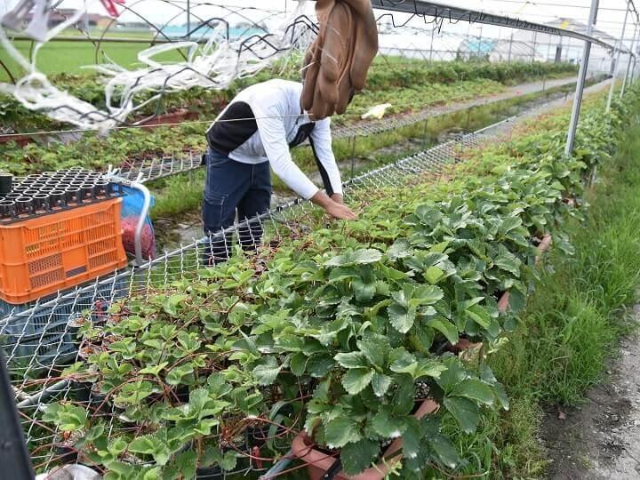 「日本一の農家」目指すSNSネイティブ世代【農垢の素顔#3 新規就農を目指す22歳】