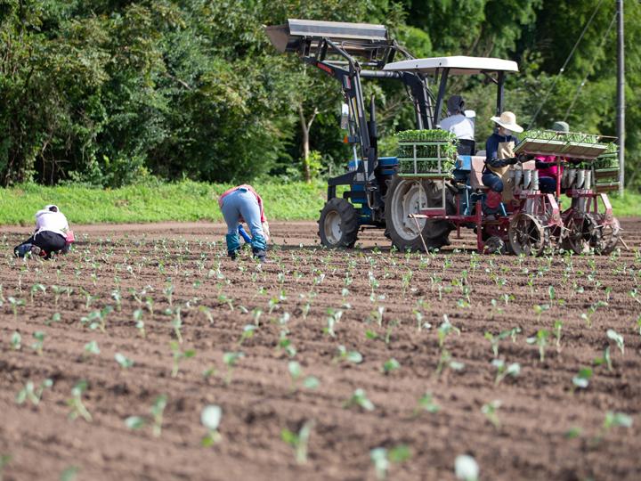 【農業体験in福島県相馬地域】多彩な作物・研修先で学べる中期農業体験で得たものとは?体験者のリアルな声からひも解く農業体験の重要性