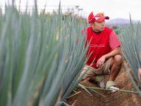 """1本1万円でネギを売るネギ農家が「有機肥料」を作った!秀品作物を育むその実力と、農業界に一石を投じる""""葱師""""の情熱に迫る"""