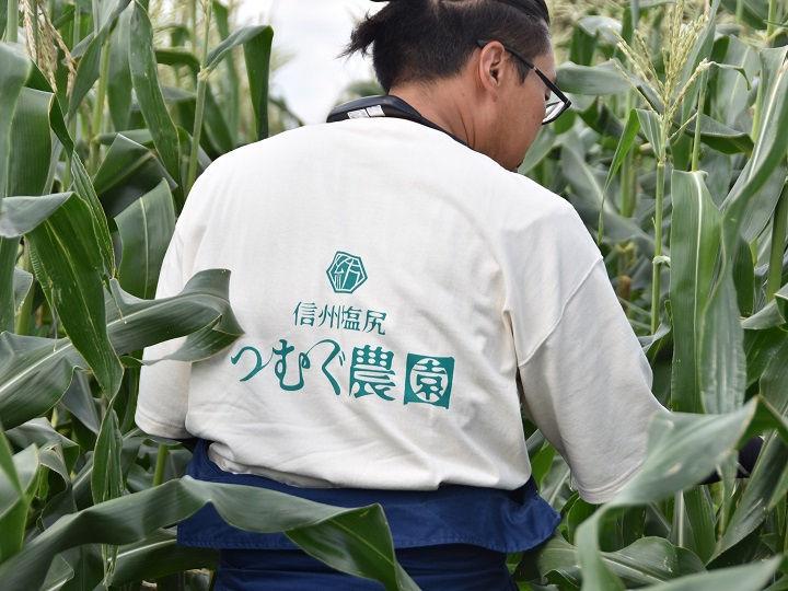 4_信州塩尻 つむぐ農園のTシャツ背中