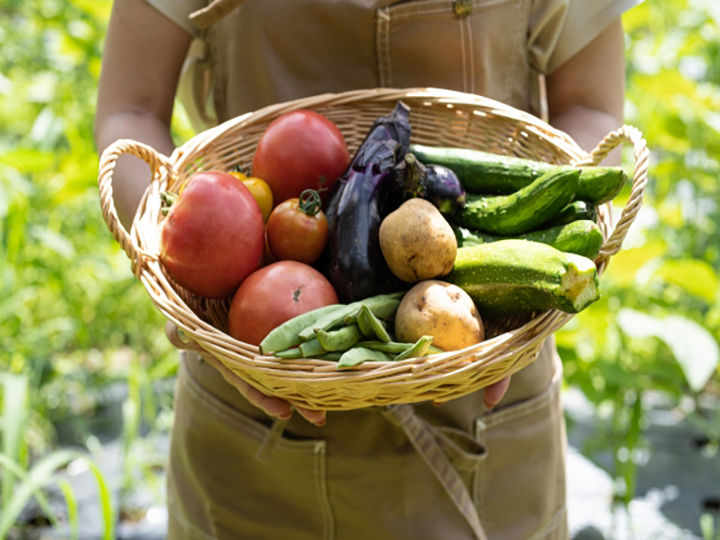 野菜を持つイメージ写真