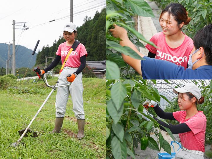 女性農家の農作業