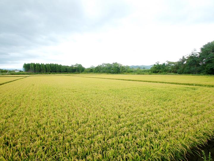 山に囲まれた三笠市は北海道の中でも豪雪地帯として知られ、豊富な雪解け水によって野菜やお米がおいしく育つ地域です