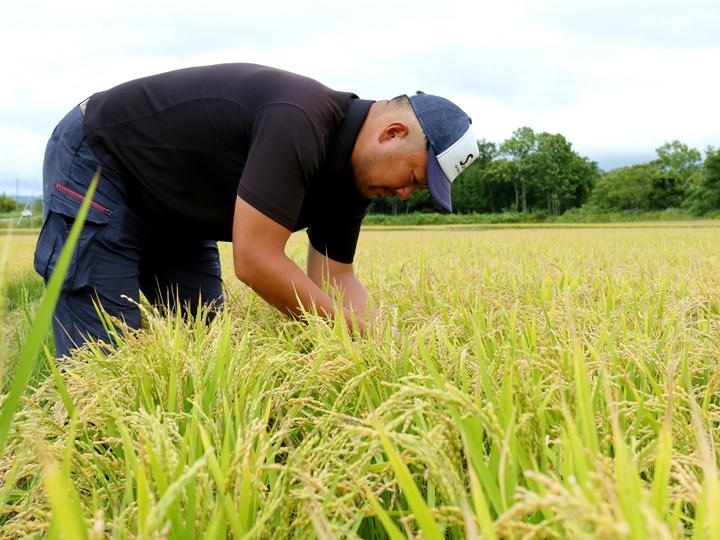 稲穂の様子をチェックする床岡さん。「有機肥料栽培を始めたばかりだが、これからもおいしくて栄養価の高い作物の栽培を心掛けたい」と意気込みます