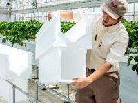 酷暑期の夏秋イチゴの秀品率をアップ! ヤンマーの『断熱送風栽培槽DN-1』の実力とは?