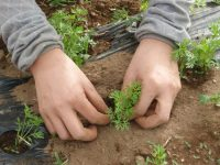 就農支援補助金を1000万円に拡充、「優しい制度」に潜むリスクとは