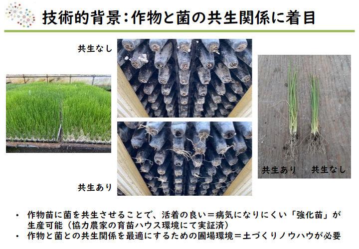 技術的背景:作物と菌の共生関係に着目