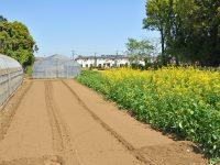 農地転用の際の地目変更とは?申請のタイミングはいつにすべき?