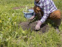 畑から宅地にする費用はいくら?手続きから整地まで費用を抑える方法とは
