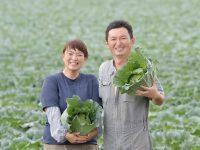 【アルバイト募集】作業の効率化を意識する『常総井上農園』。最新農機の操作と栽培スキルが身に付く環境で野菜づくりに挑戦しませんか