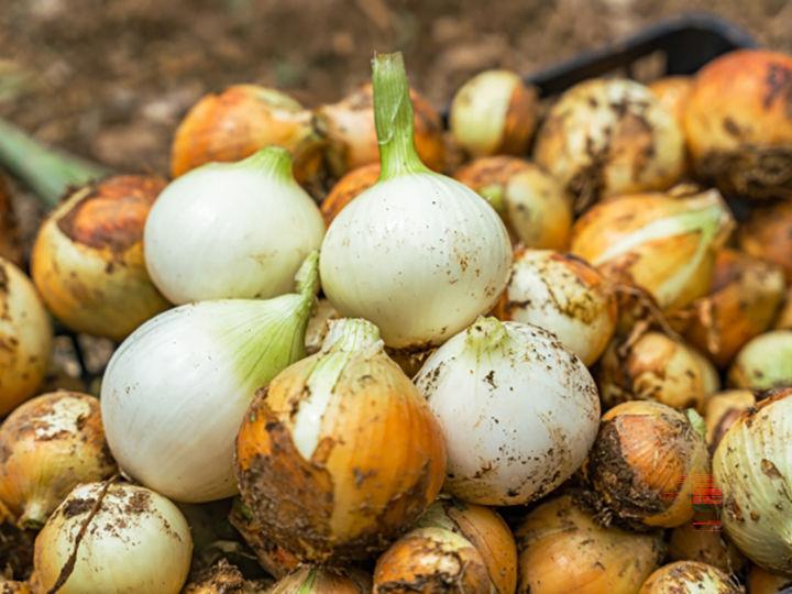 新たに農業を始めるなら引退農家からの「事業承継」がねらい目